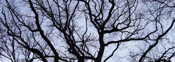 Trees-Header-02